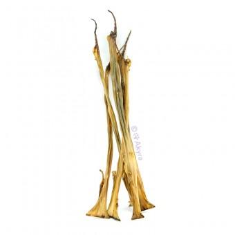 Akyra Konijnenhuid 50 cm