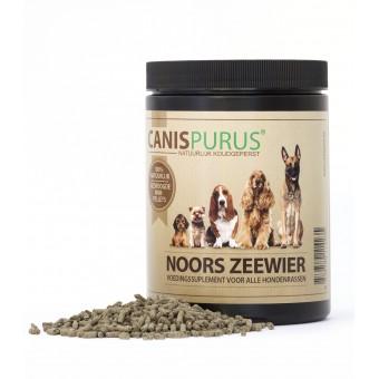 Canis Purus Noors Zeewier